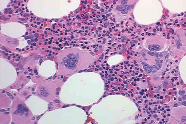 test under hematology